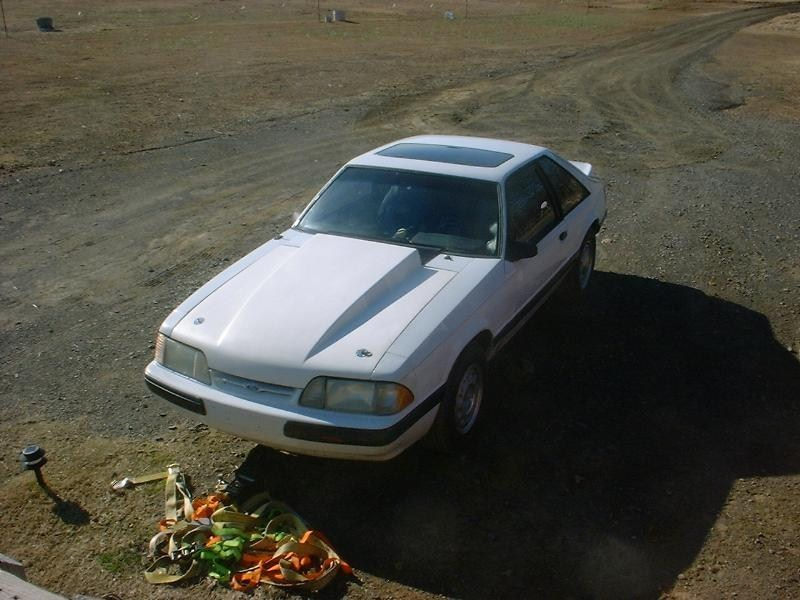 white5ohs 1989 Ford Mustang photo