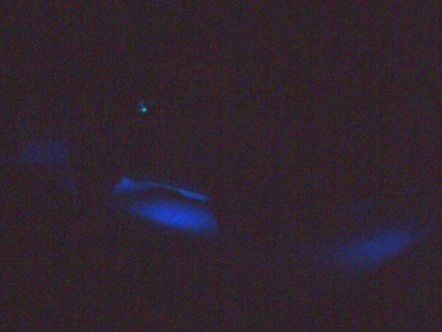 Fossil37s 1995 Chevy S-10 Blazer photo
