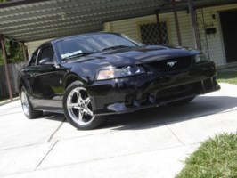 bDs pOnYs 2000 Ford Mustang photo thumbnail